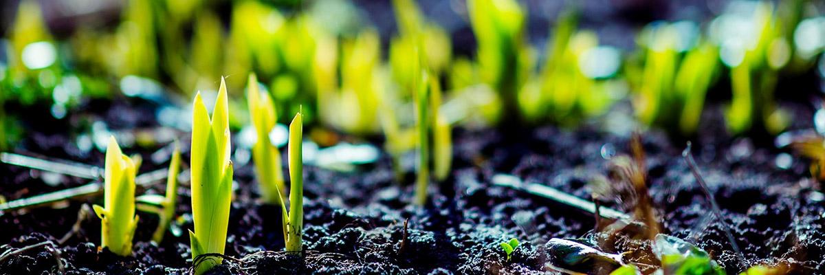 plants supplier