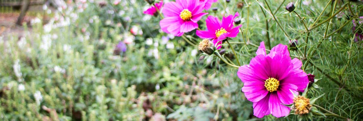 Flowering Plant Supplier